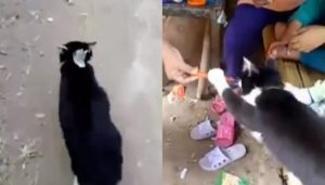 Video Viral Kucing Jajan Sosis Di Warung